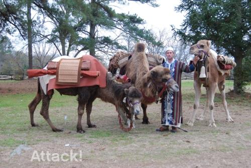 Upenn-Brand-Ambassador-with-Camels